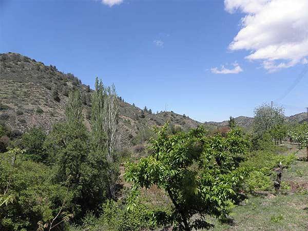 Kakopetria Forest, Cyprus