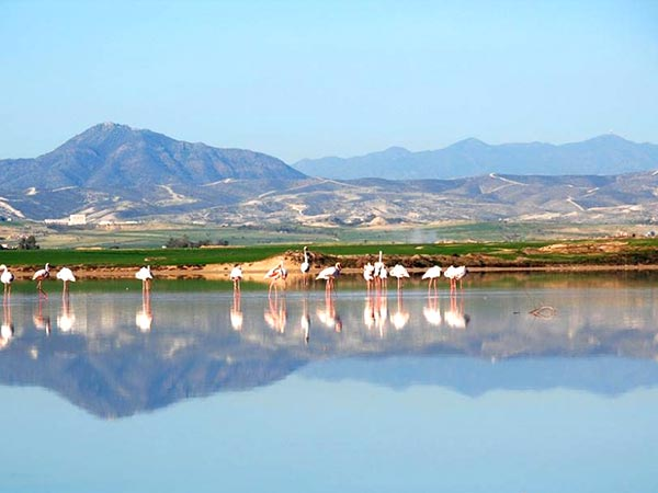 Larnaca Salt Lake, Cyprus